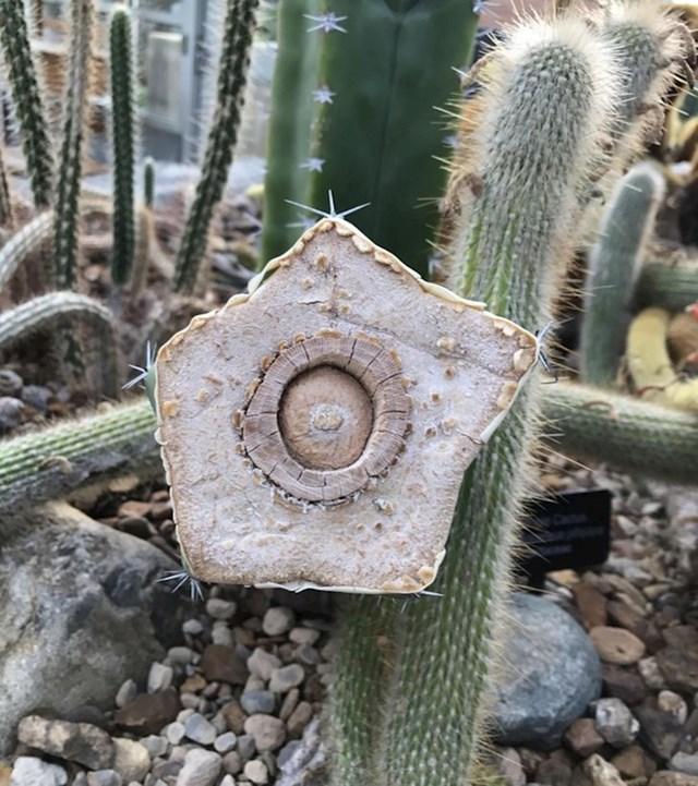 Presjek kaktusa nije nimalo nalik onome kako smo ga zamislili