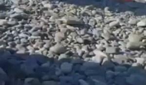 Netko je na Jadranu snimio tipa koji se prenuo iz sna i nije mogao pronaći mobitel; morate pogledati