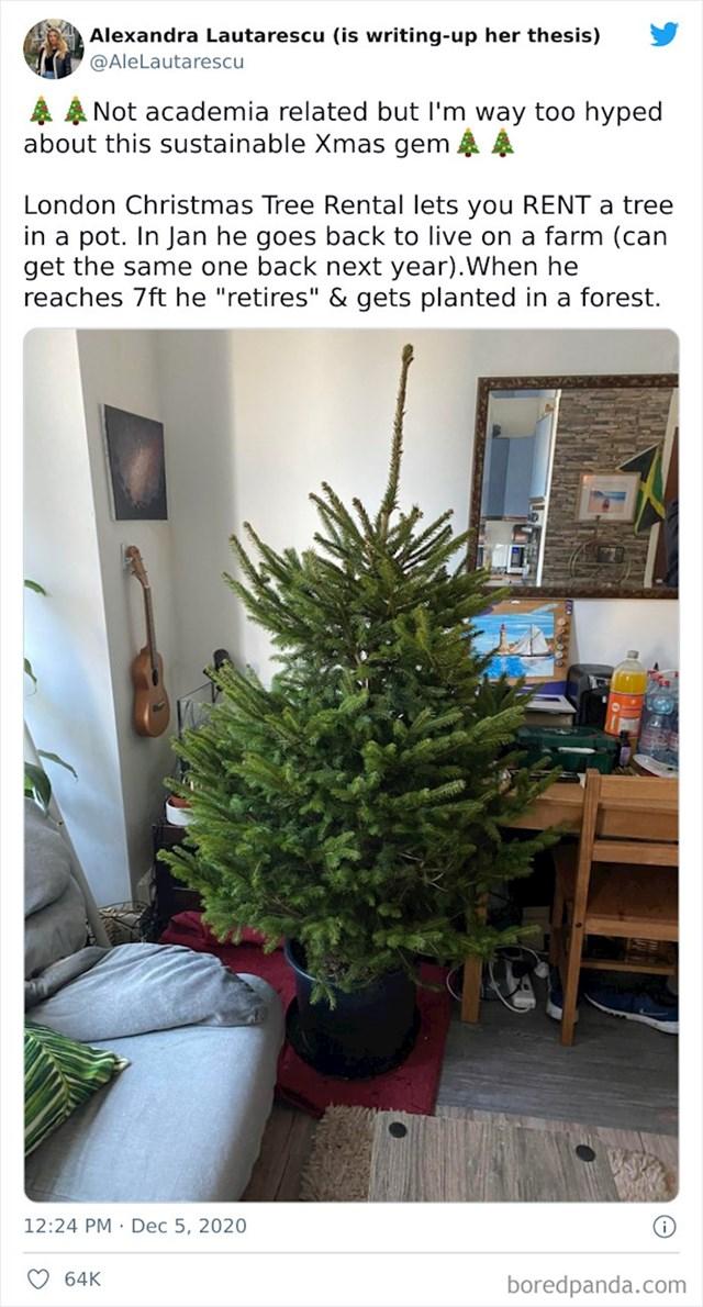 Božićno drvce u tegli koje se iznajmi tokom blagdana, a u siječnju se vrati