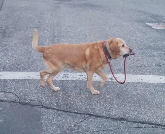 Pas koji sam sebe izvodi u šetnju