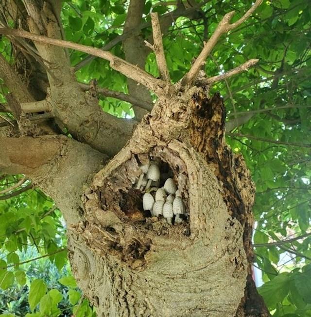 Čudovište s gljivama umjesto zubi