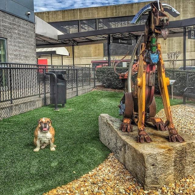 Park za pse na aerodromu u Atlanti