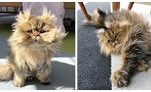 Upoznajte Barnabyja, perzijskog mačka koji uvijek izgleda kao da nije popio jutarnju kavu!