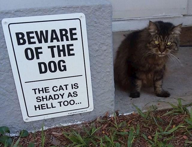 Ako je mačka ovakva, psa ne želimo niti vidjeti
