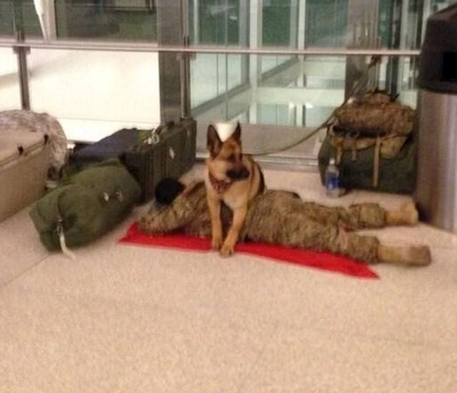 Spavamo na smjene! Što ti je vojni pas!