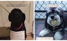 J'accuse..! 19 fotki pasa koje se tereti za strašni neposluh