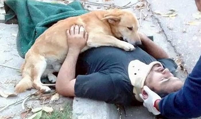 23 dokaza da nas psi vole bezuvjetno i neograničeno; ova galerija će vas ganuti do suza