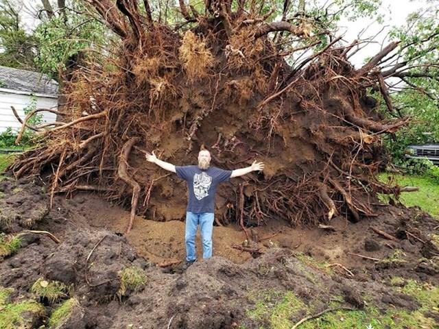 25. Oluja je prevrnula stablo. Možete zamisliti koliko je bilo visoko i koju je štetu prouzrokovalo, ako mu je korijen ovoliki
