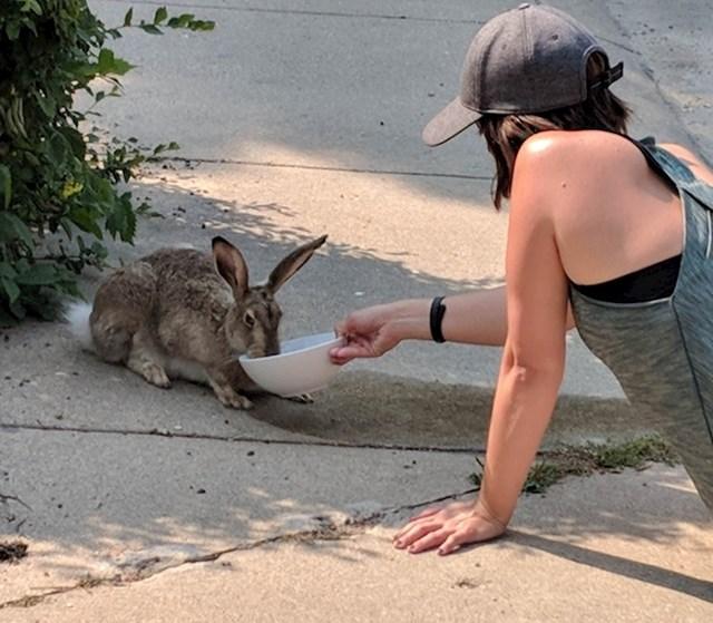 Ova žena je davala vodu žednom zecu u vrijeme velikih vrućina.