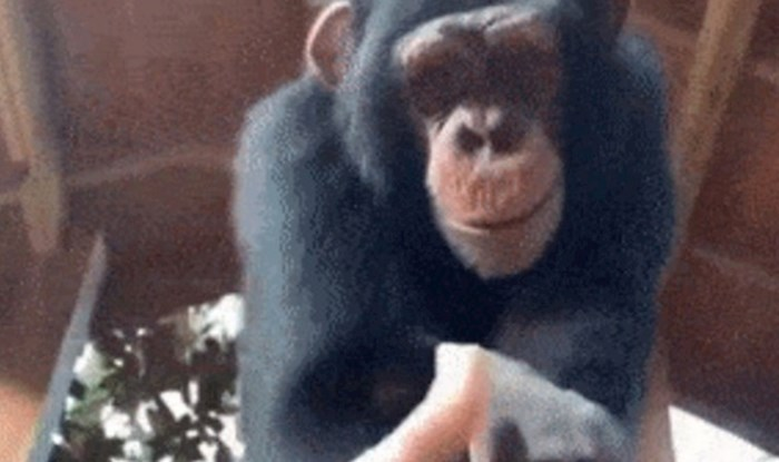 Snimio je kratki video i pokazao zbog čega mu je ovaj majmun pravi prijatelj