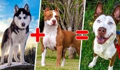 15 fotografija koje će vam otkriti kako su nastali ovi prekrasni psi mješanci