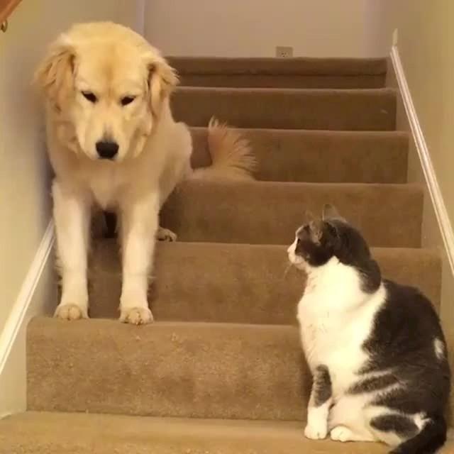 """""""Prođi ako smiješ."""""""