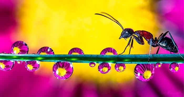 30 očaravajućih fotografija kapljica vode koje zbog refleksije izgledaju spektakularno
