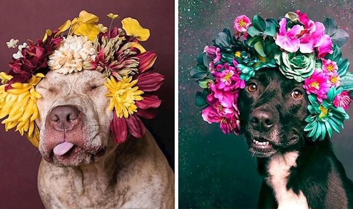 """Fotografkinja slika """"opasne pse"""" kao slatke kućne ljubimce kako bi im pomogla da pronađu novi dom"""