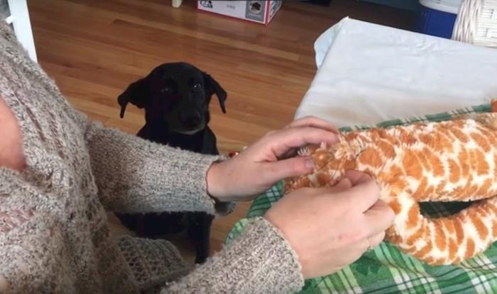 Pas je bio jako zabrinut kad je njegova omiljena igračka morala na operaciju