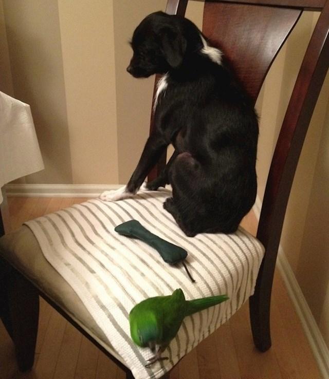 """""""Moj pas se jako bojao bratove papige."""""""