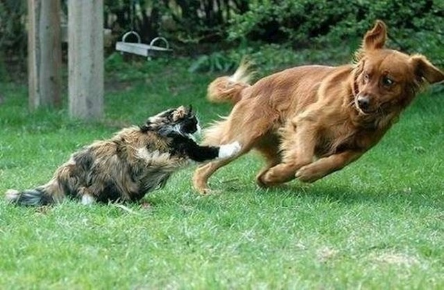 """""""Naš pas nije htio imati posla s ovom velikom čupavom macom."""""""