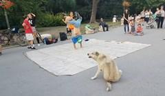 Smiješni pas je ugledao breakdancere, pridružio im se i svojim potezima privukao svu pažnju na sebe