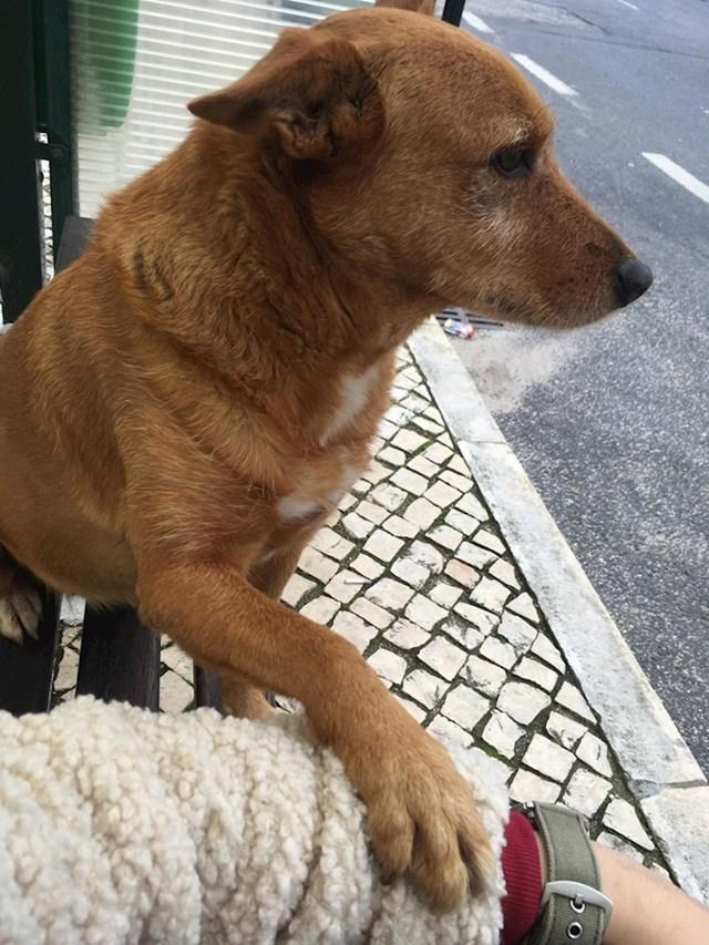 """""""Imala sam loš dan i ovaj pas je došao do mene na autobusnoj stanici i zatražio draganje. Sad mi je dan odličan."""""""