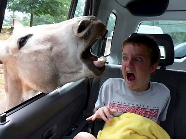 Oprez, konji!
