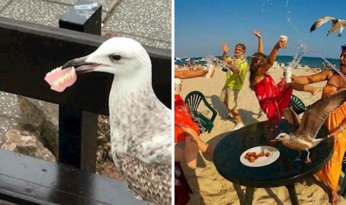 15 ptica koje su bile toliko bezobrazne da su ih ljudi morali slikati i pokazati ostalima