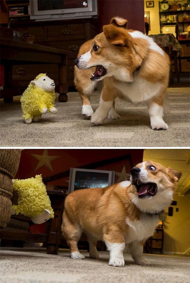 """""""Mala plišana ovčica prestrašila je našeg psa."""""""