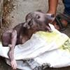 Izgladnjeli i bolesni psić umirao je u staroj vreći, a onda su ga pronašli i omogućili mu novi početak
