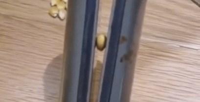 Djevojka je primijetila da se kokice mogu praviti i bez ikakvih štednjaka, pogledajte kako