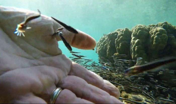 """Ronilac je snimio kako su tisuće prijateljski raspoloženih ribica grizle njegovu kožu i """"jele"""" ga"""