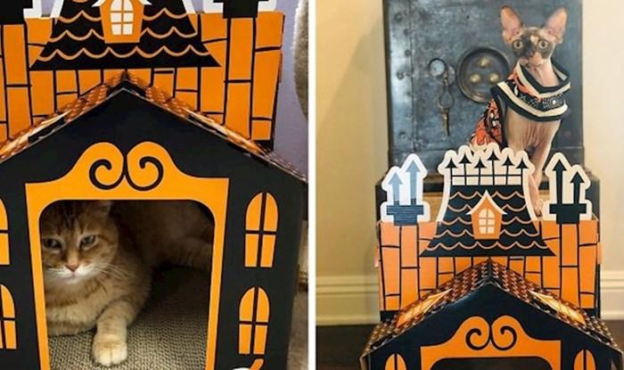 Neki se već pripremaju za Noć vještica, ova kućica će se svidjeti mnogim vlasnicima mačaka