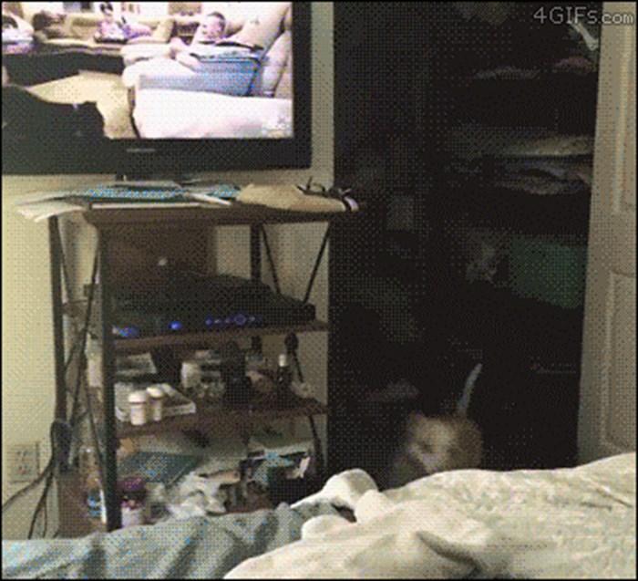 Vlasnik je na TV-u pustio snimke pasa, a onda ga je nasmijao njegov hiperaktivni i pomalo zbunjeni ljubimac