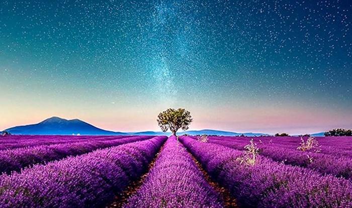 Fotograf je posjetio polja lavande u južnoj Francuskoj i snimio nevjerojatno lijepe prizore