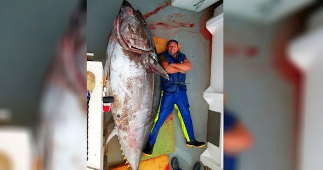 Mnogi rado kupuju tunu u konzervi, ali zamislite da ovo vidite u trgovini!