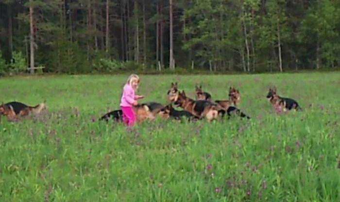 Djevojčicu je okružilo 14 njemačkih ovčara, roditelji su snimili što se dogodilo kad je počela bacati travu oko sebe