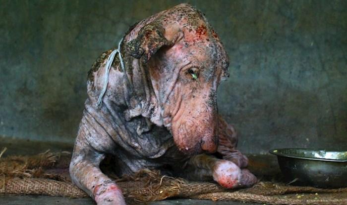 Teško bolesni pas je odustao od života i bespomoćno ležao kraj ceste, a onda se dogodilo čudo