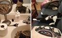 17 slika koje pokazuju kako život izgleda kada imate mačku u kući