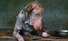 Teško bolesni pas je odustao od života i samo ležao kraj ceste, a onda se dogodilo čudo