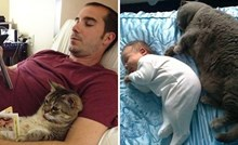 20 smiješnih slika kućnih ljubimaca koji kopiraju svoje vlasnike u svemu što rade
