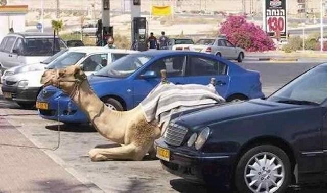 Vlasnik ovog transportnog sredstva sigurno uštedi puno novaca jer ne mora kupovati benzin.