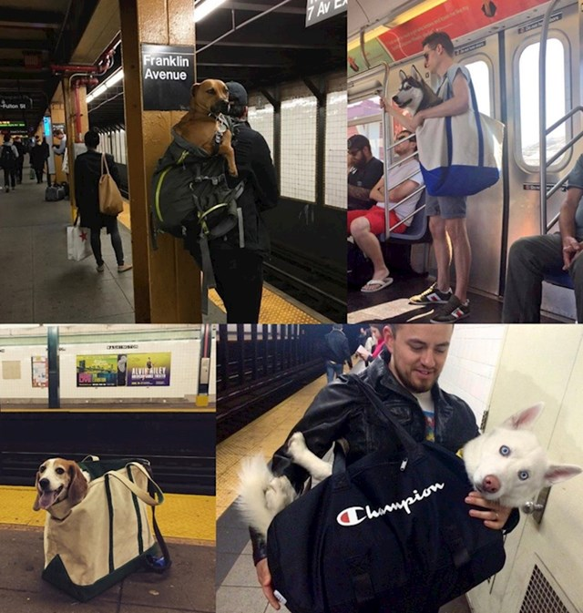 U New Yorku su u metrou zabranili sve pse koji ne mogu stati u torbu. Vlasnici su odgovorili na genijalan način.