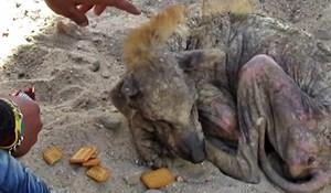 VIDEO Pas koji od slabosti nije više mogao ni ustati doživio je nevjerojatnu promjenu