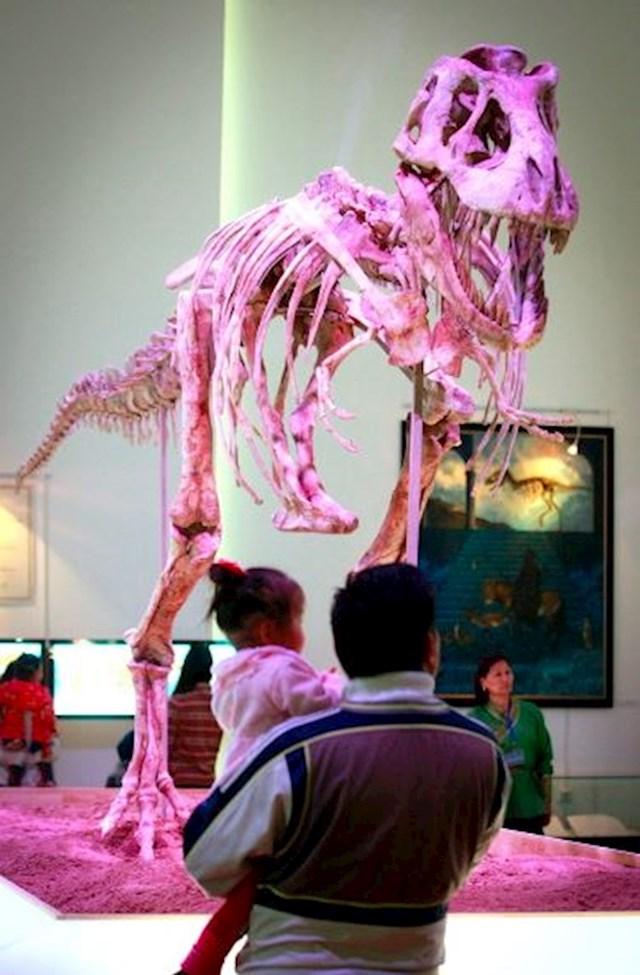 Kosti dinosaura - preko 1 milijun dolara