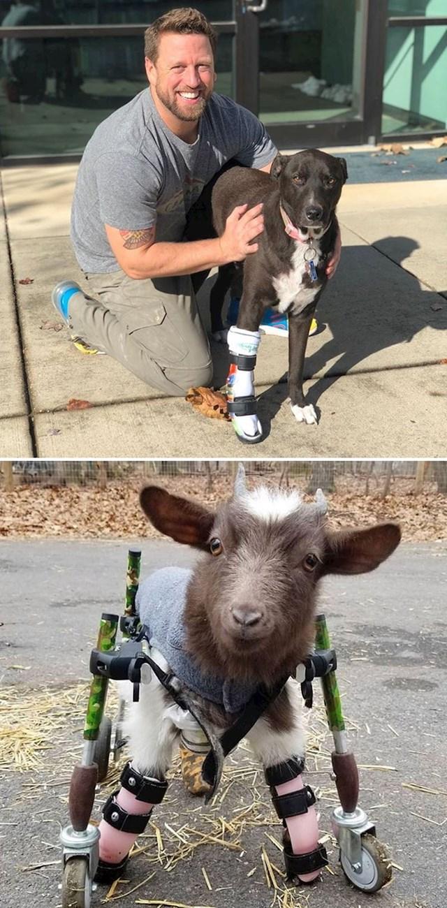 Derrick Campana je pomogao tisućama životinja izradom prilagođenih proteza.