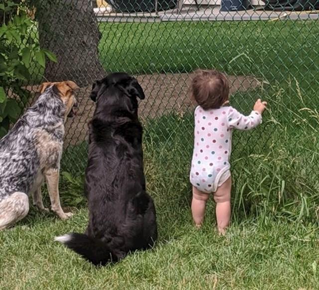 """""""Susjed je našim psima ponekad kroz ogradu davao poslastice. Od nedavno je i našoj klinki počeo davati slatkiše. Slikala sam kako čekaju novu dozu."""""""