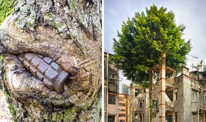 Ove nevjerojatne fotke pokazuju kako se priroda snalazi kad je čovjek ostavi na miru