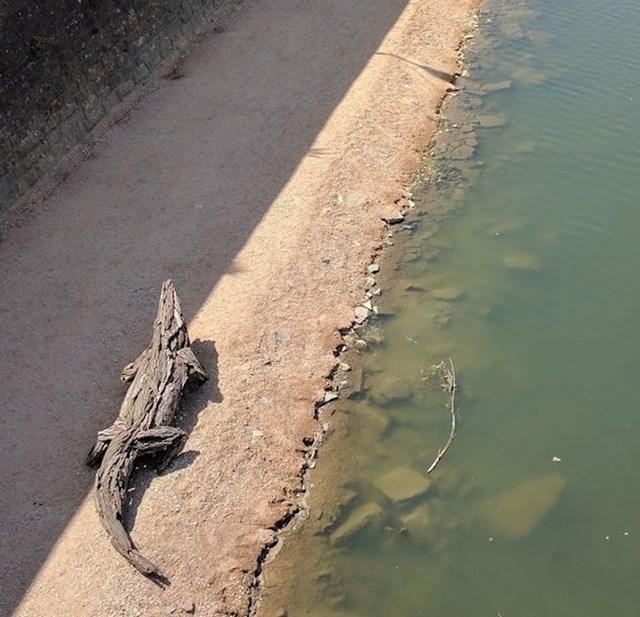 Ne, ovo nije krokodil. Pogledajte malo bolje.