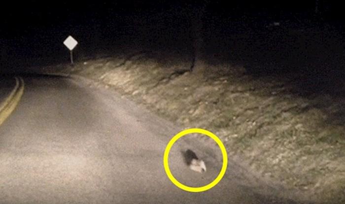 Vozač se usred noći zaustavio i snimio prizor koji ga je nasmijao do suza