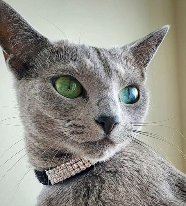 ...sve do njihovih očaravajućih očiju.