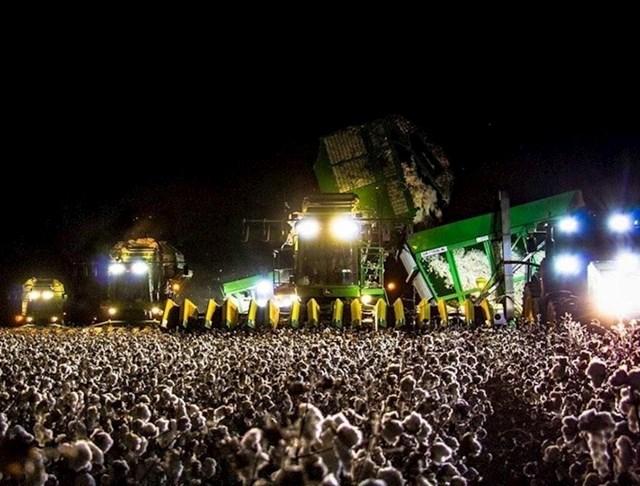 Kombajn na polju pamuka izgleda kao veliki rock koncert.