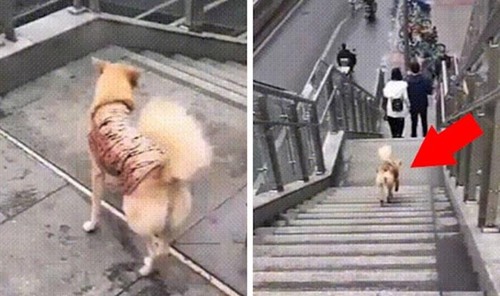Pas nije imao pametnijeg posla, svojim čudnim ponašanjem je nasmijao prolaznike
